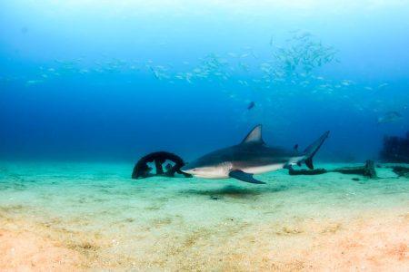 Scuba diving tour in Cabo Pulmo