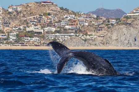 Los Cabos Whale watching & Snorkel Combo