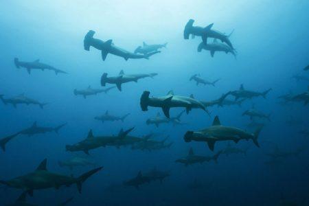 Gordo Banks Diving Tour
