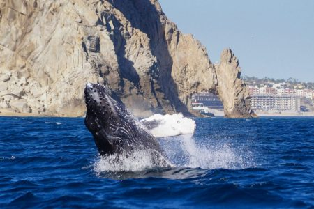 Cabo San Lucas whale watching tours