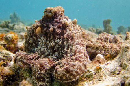 Scuba diving in the sea of cortez