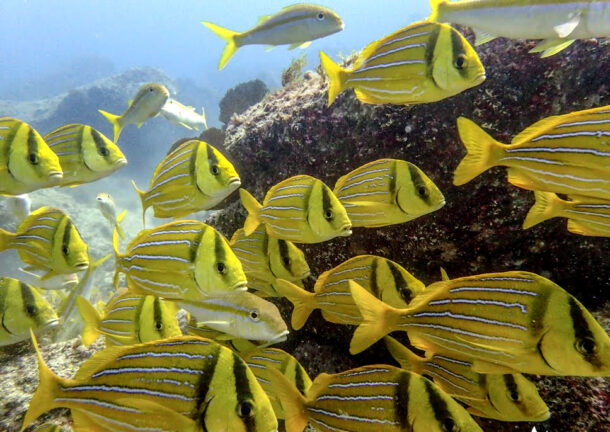 Fishes in Los Cabos