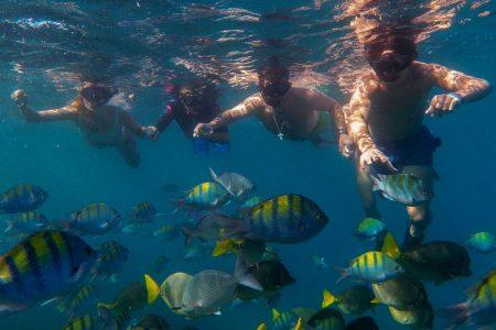 Snorkeling tours in Cabo san lucas